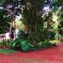 A TROPICAL GARDEN (Cape york queensland garden scene)