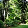 garden in the tropics of Australia (rainforest garden in tropical Australia)