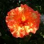 S.d._zoo_08_17_09_032