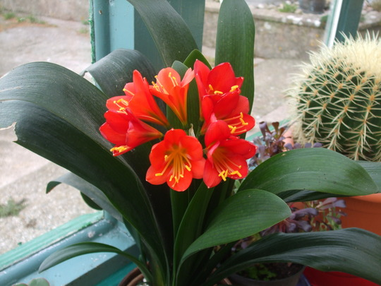 clivia doing it again