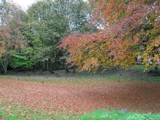 022.jpg  Golden fallen leaves