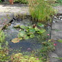 My daughter's pond