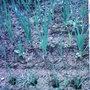 Garden_photo_s_101