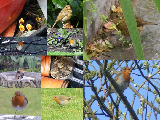Robin and Family (my first Collage)