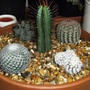 Cactus pot.