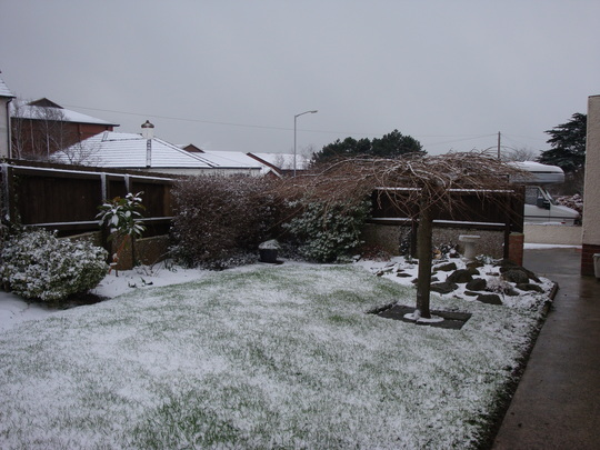 Hedging, cherry tree and rockery in the snow - Feb 2009