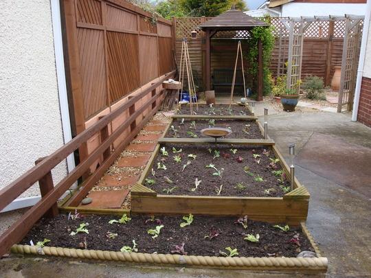 My veg plot - March 2009