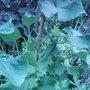 Garden_photo_s_090