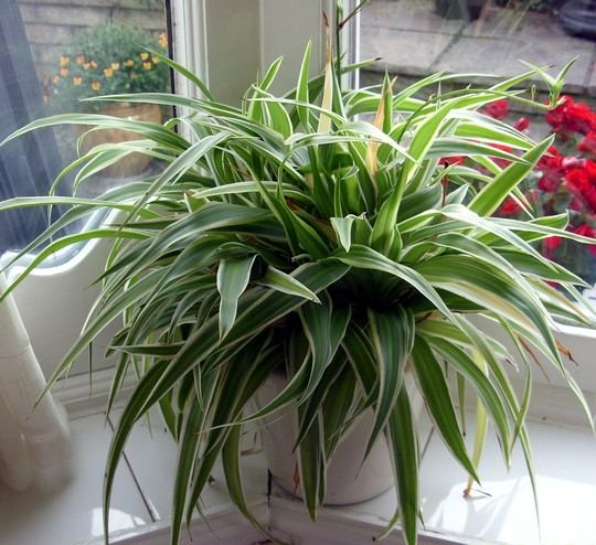 Common house plant names and pictures house pictures - Names of indoor plants ...