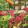 An_autumn_corner