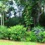 shrubs and palms  (Garden scene)