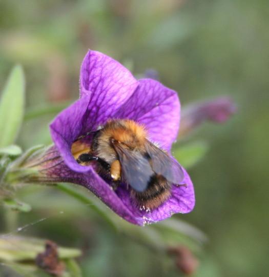 Bee bum!