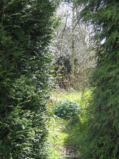 My Secret Garden Beckons