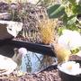 Pond_with_camellia_april_08a
