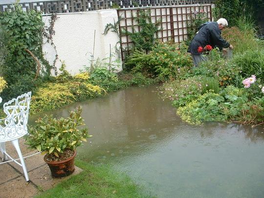 flooded pond again last summer (Pleioblastus variegatus, skimmia)
