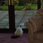 Symba watching Pheasant