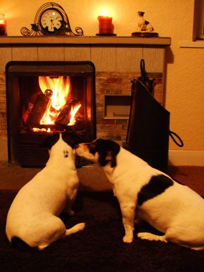 "Buddy & Holly - ""Cosy Fire"""