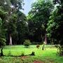 Garden scene (a tropical rainforest garden)