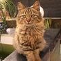 my cat   (city)