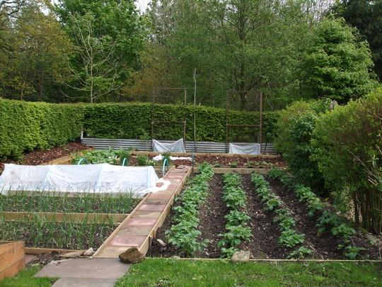 Vegetable Plot (completed) - downward