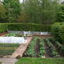 Vegetable Plot (completed) - downward