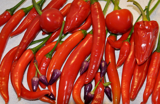 Home Grown Chilli
