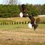Eagles_sparring1_small_