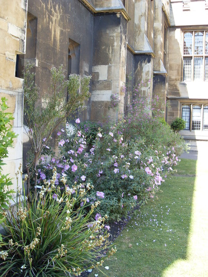 Lambeth palace garden
