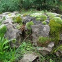 Moss and Stone (Bryophyta)