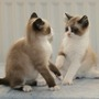 Tilly & Tammy 1