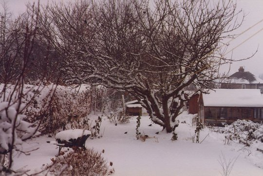 Old garden in the snow