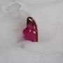 Snow_cyclamen1