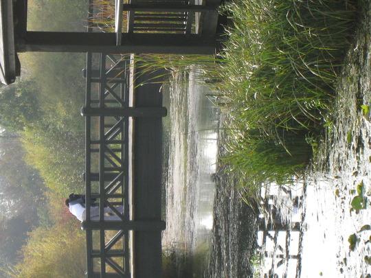 Barnes Wetlands Trust