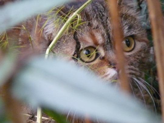 Ah....danger in the garden....Poppycat!!