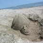 Sand Snail :)