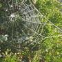 Frosty Web..caught in sunlight's glow
