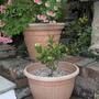 Gardenia_and_chrysanths.jpg