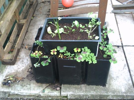 DIY planter!