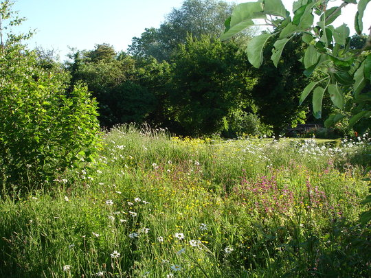 the wild flower patch