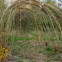 Willow_arch_1