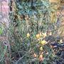 bloom_in_flower_april_2008.jpg