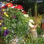 Summer Pots, 2006