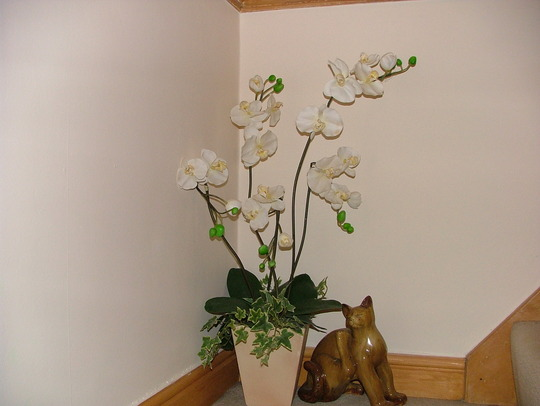 my specialist orchid for barbara,morgana and jacque lol