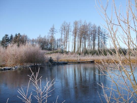 Frosty Morning - Wee Wood Lake