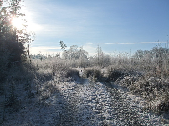 Frosty Morning - The Wee Wood