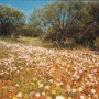 Springtime in western Australia - wildflowers blooming.