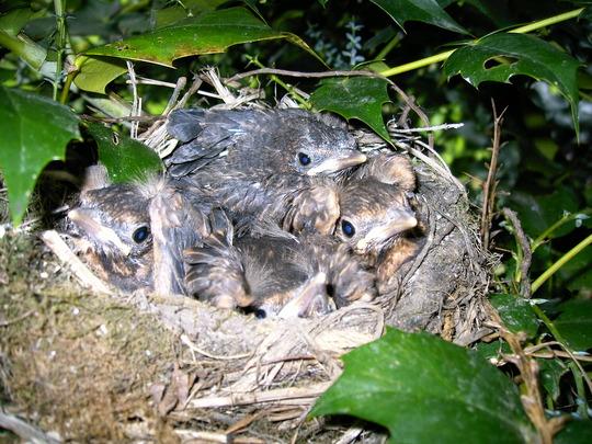 Close up Birds nest