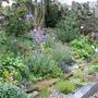 Butterfly garden I made in a local churchyard