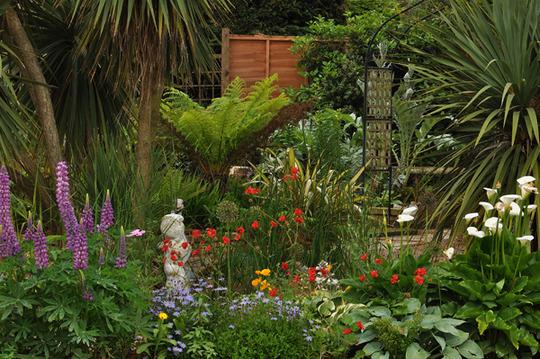 my garden 2009
