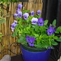 my blue pot...